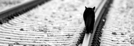 cropped-facebook-cover-black-cat-railroads.jpg