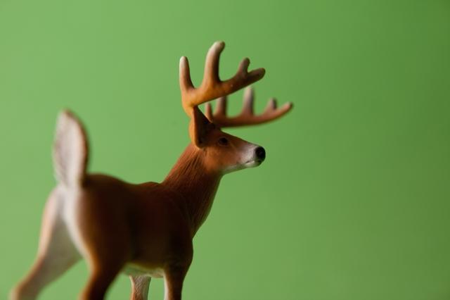 Ciervo verde