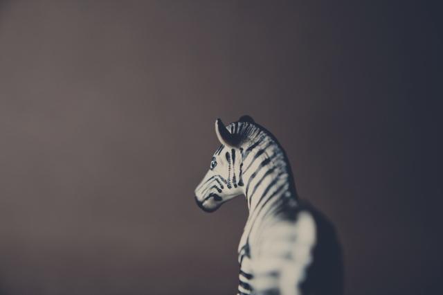 Zebra-1